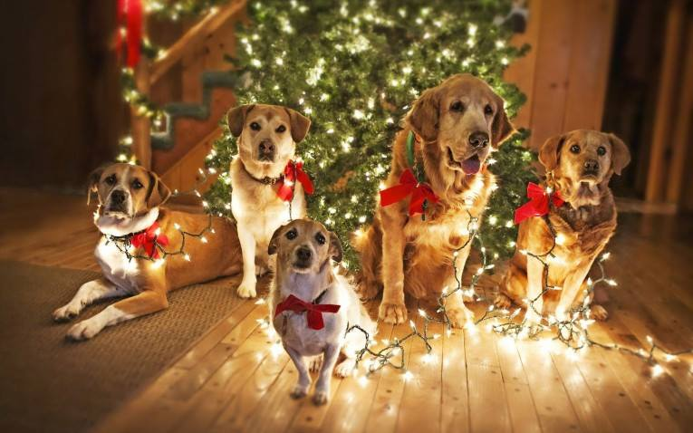 dogs home for the holidays